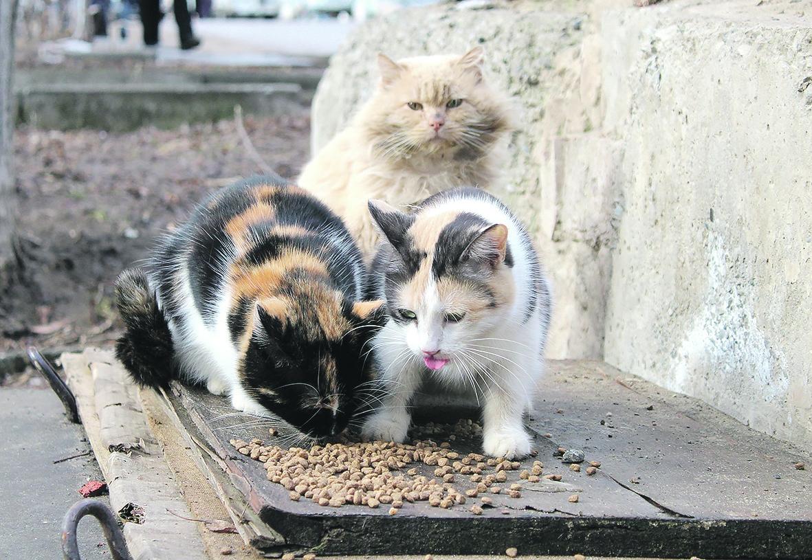 Корми котов и кошек!