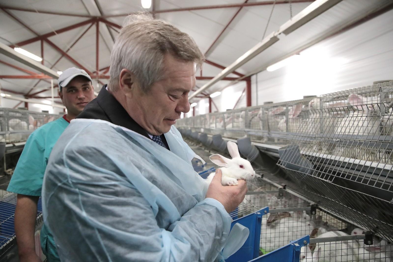 Василий Голубев распределил субсидии на поддержку фермеров и развитие сельской кооперации