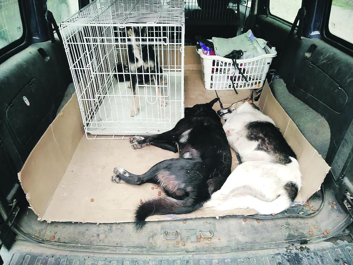 В Белой Калитве ребенка укусила бездомная собака