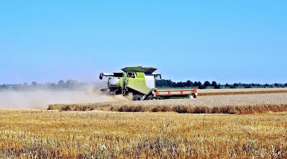 Более 100 млн тонн зерна собрано в России