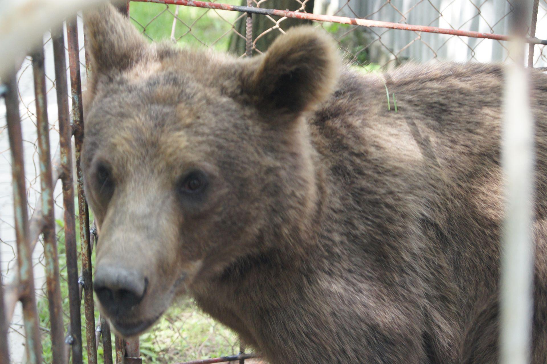 Полным ходом идет строительство нового современного вольера для содержания взрослых медведей в  белокалитвинском парке  им. Маяковского