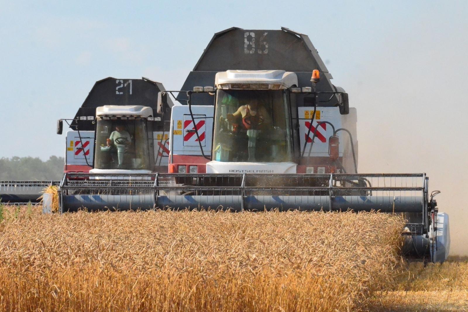 Полевой дневник: на Дону убрано более четверти площадей зерновых культур