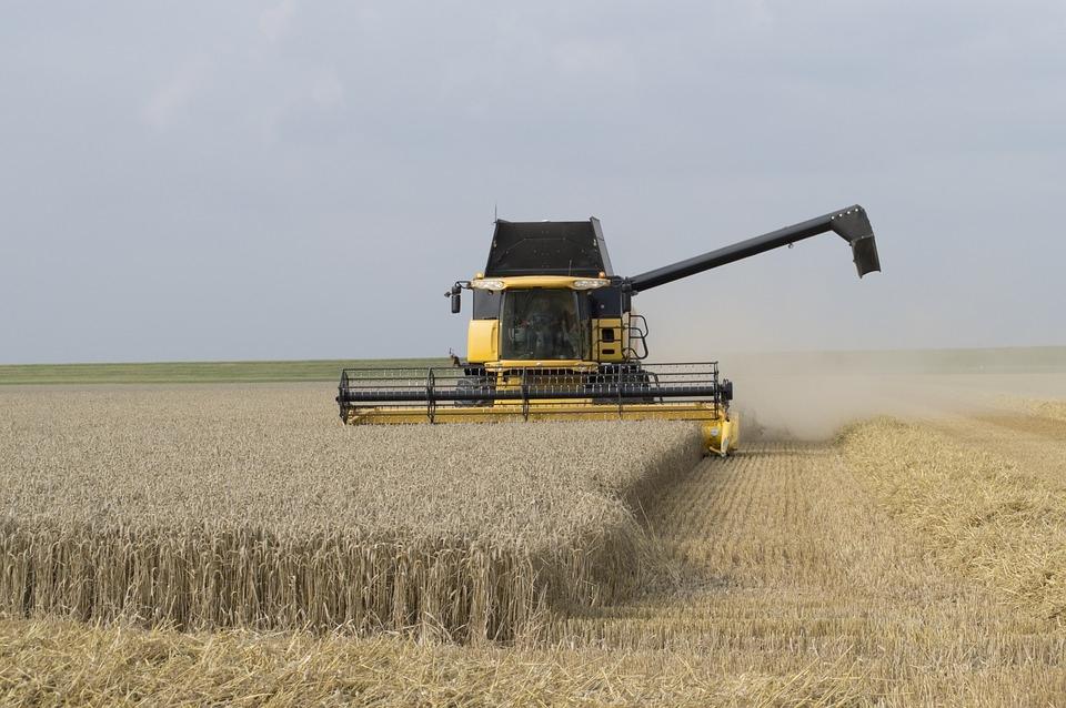 Сельхозтоваропроизводители Белокалитвинского района собрали 230 тысяч тонн ранних зерновых культур