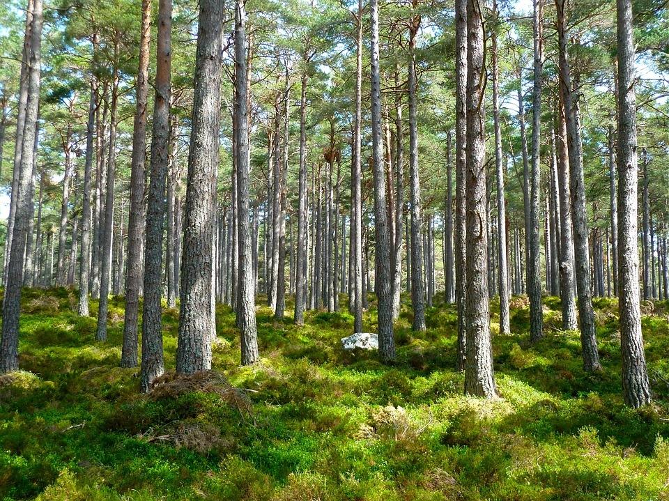 Лес в России оценили дороже всей ее нефти