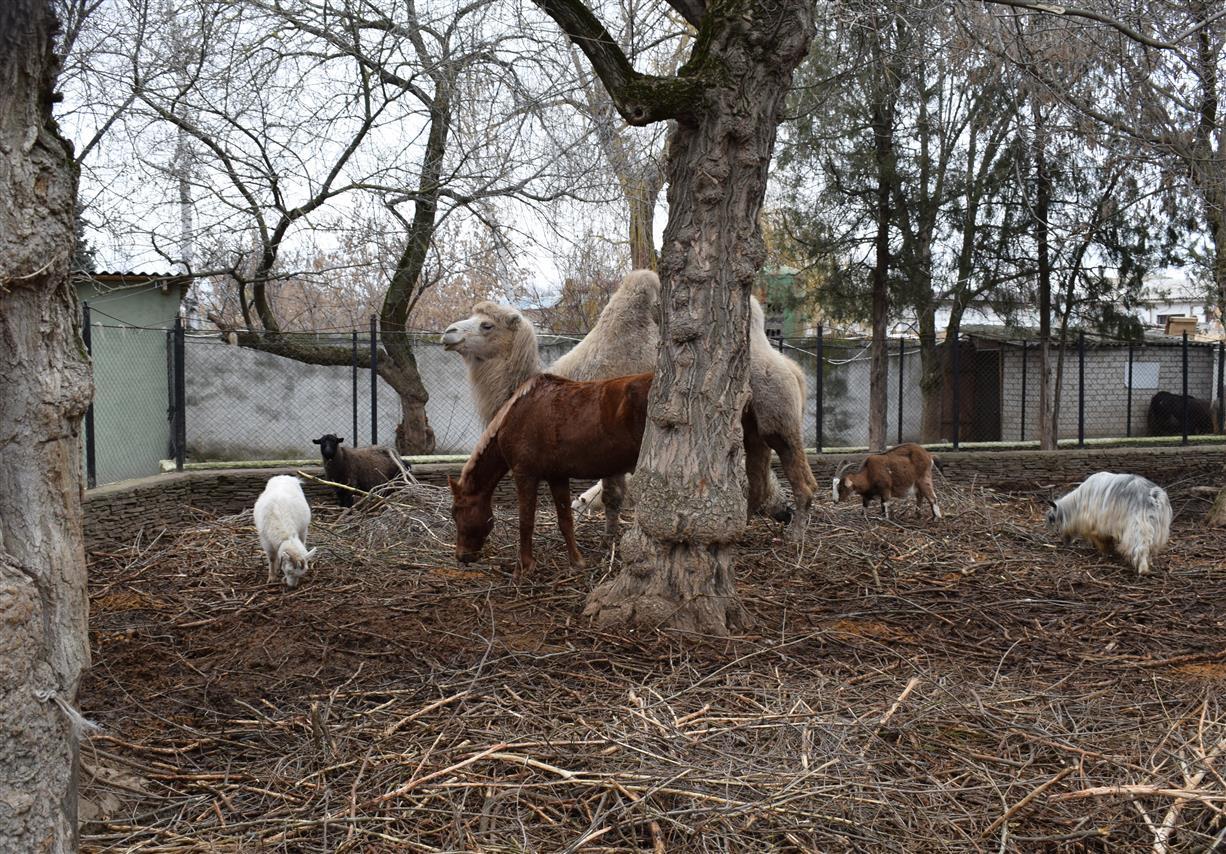 Сено и овес в подарок животным парка им. Маяковского