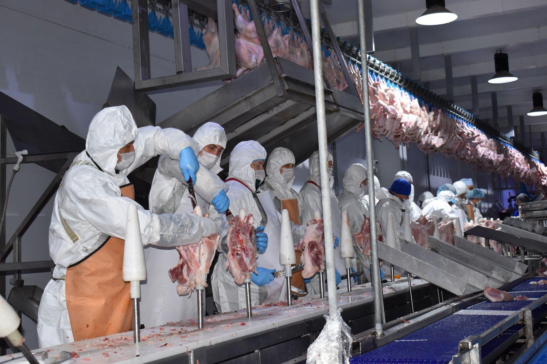 228 объектов по производству мяса индейки и утки введены на Дону