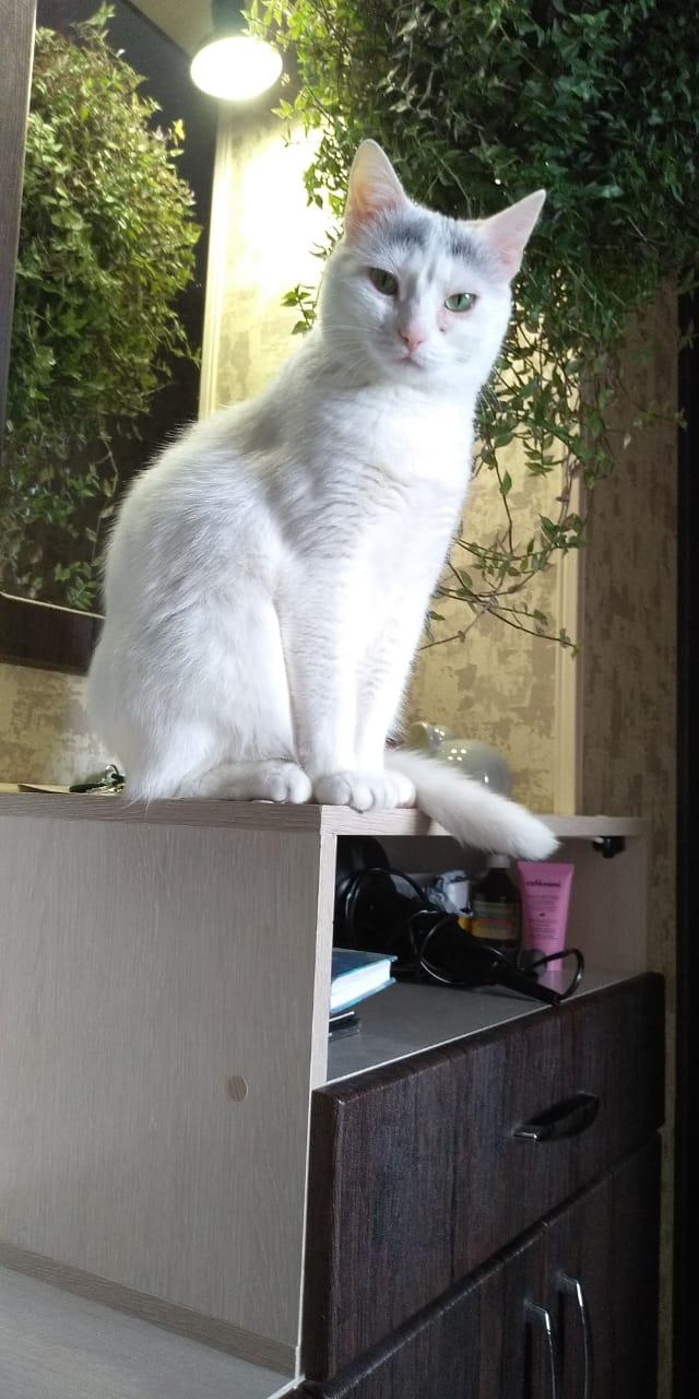Кошка Умка