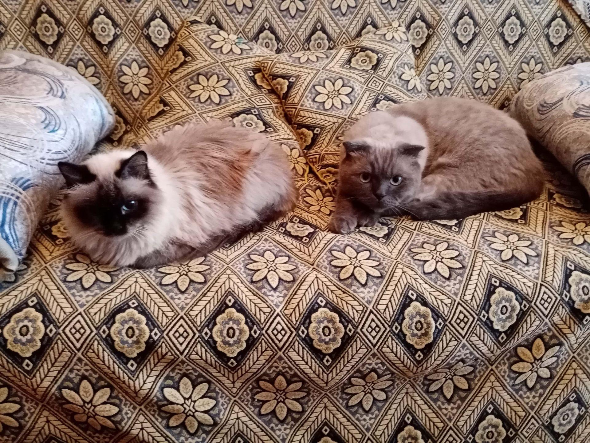 Гейзи и Филипп