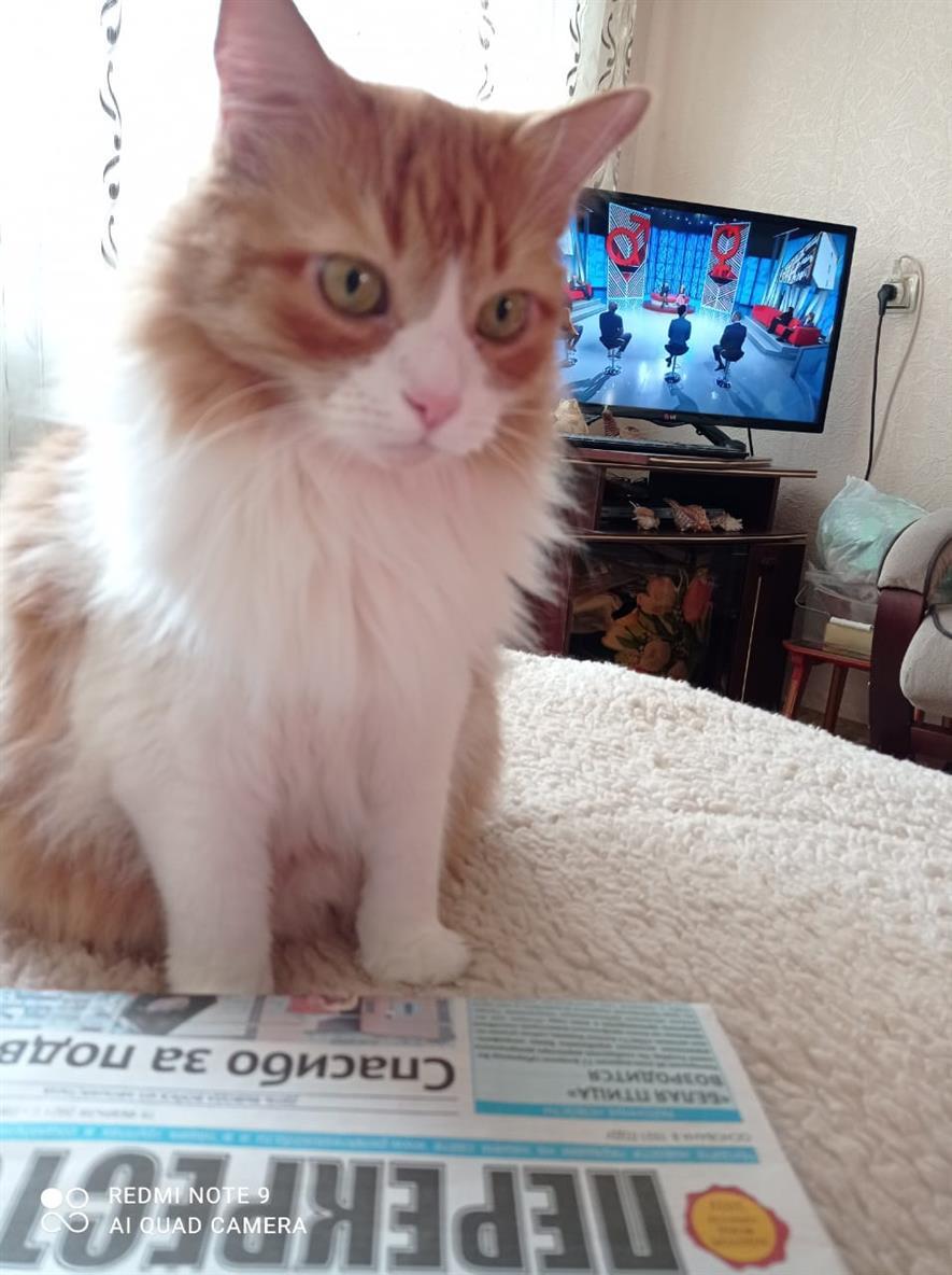 Рыжие котики Бублик и Персик от Галины Орлик