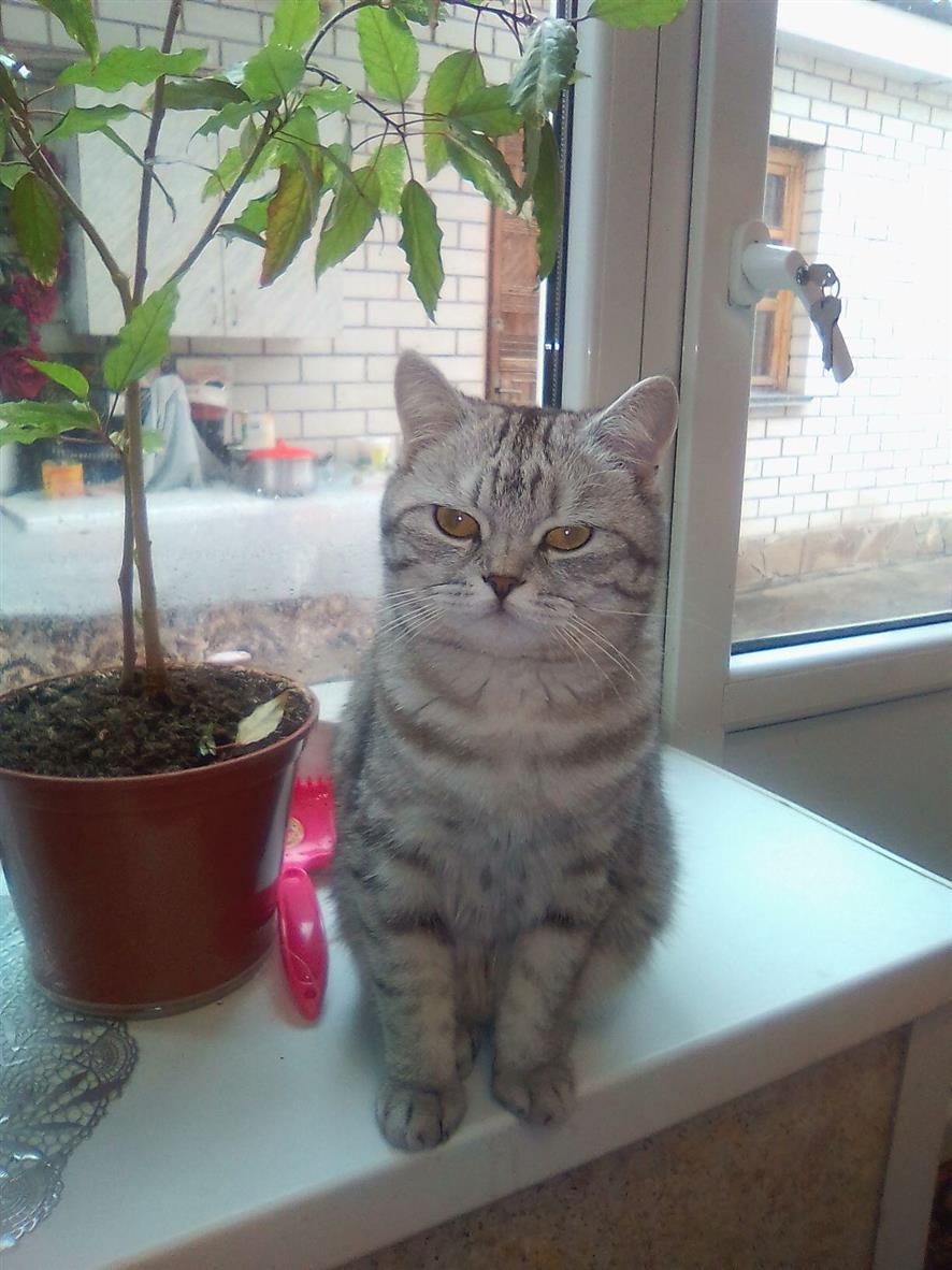 Полосатая Соня — кошка в тельняшке