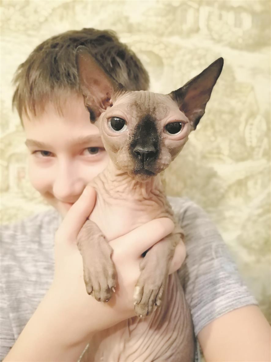 «Зачем вы кошку побрили?!»