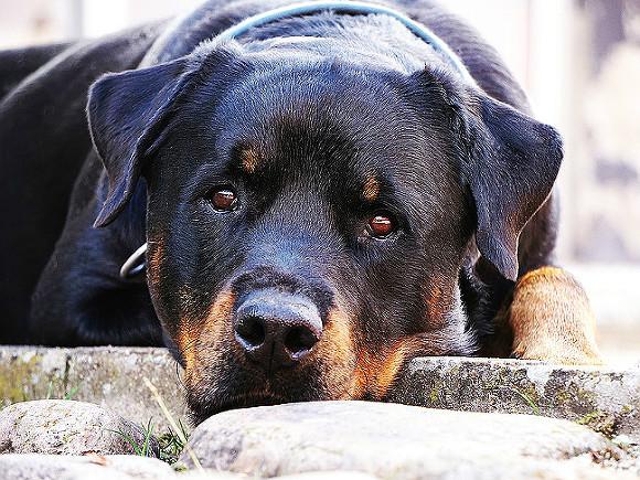 В Госдуме усомнились в необходимости усыпления бездомных животных