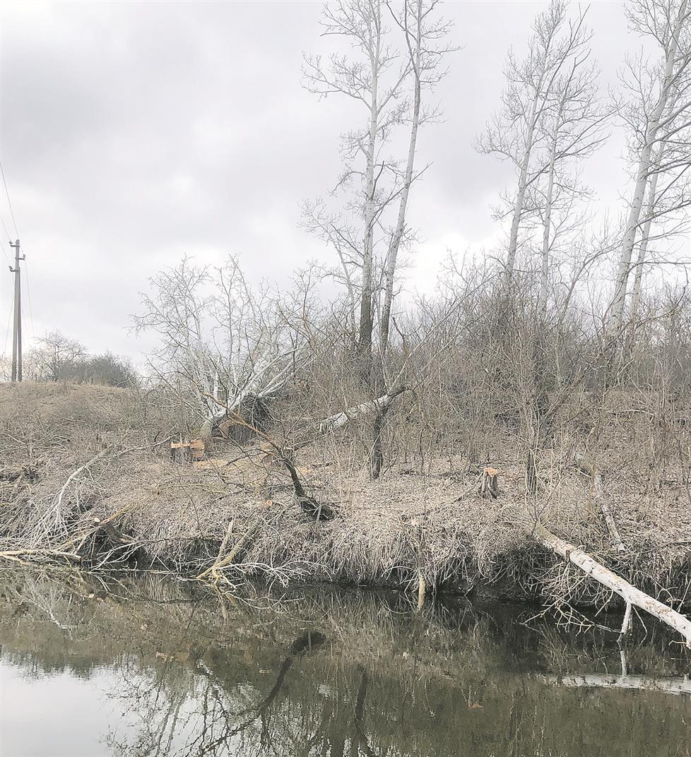 Пошто дерева погубили?