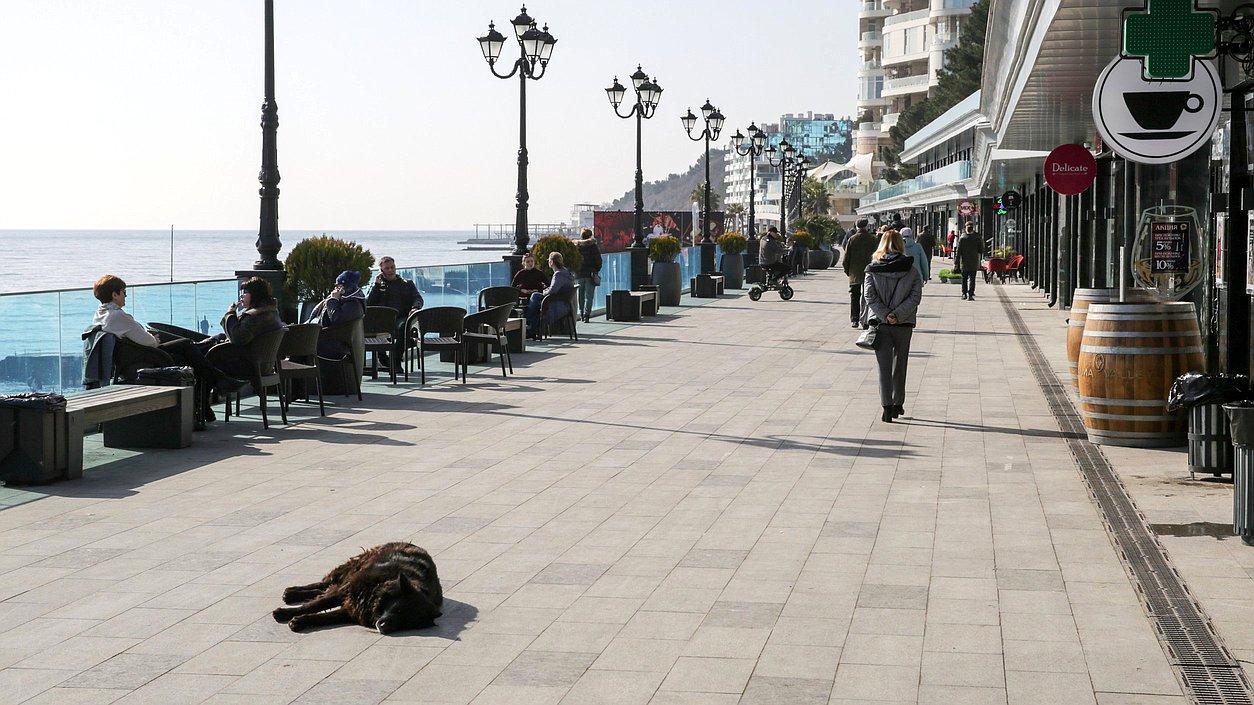 Госдума: Возврата к отстрелу бездомных животных в России не будет