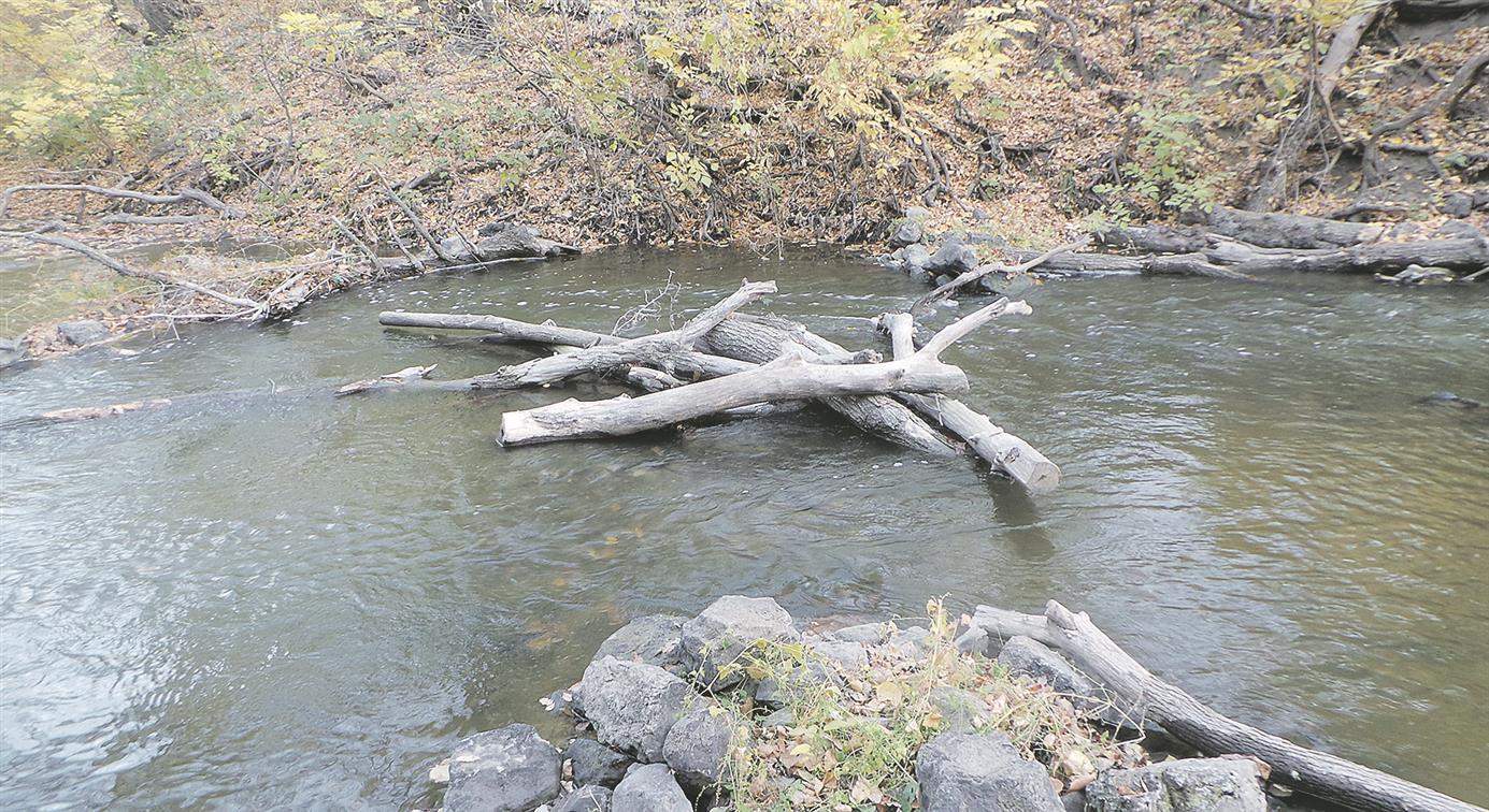 Река обмелела, бурелом по берегам…