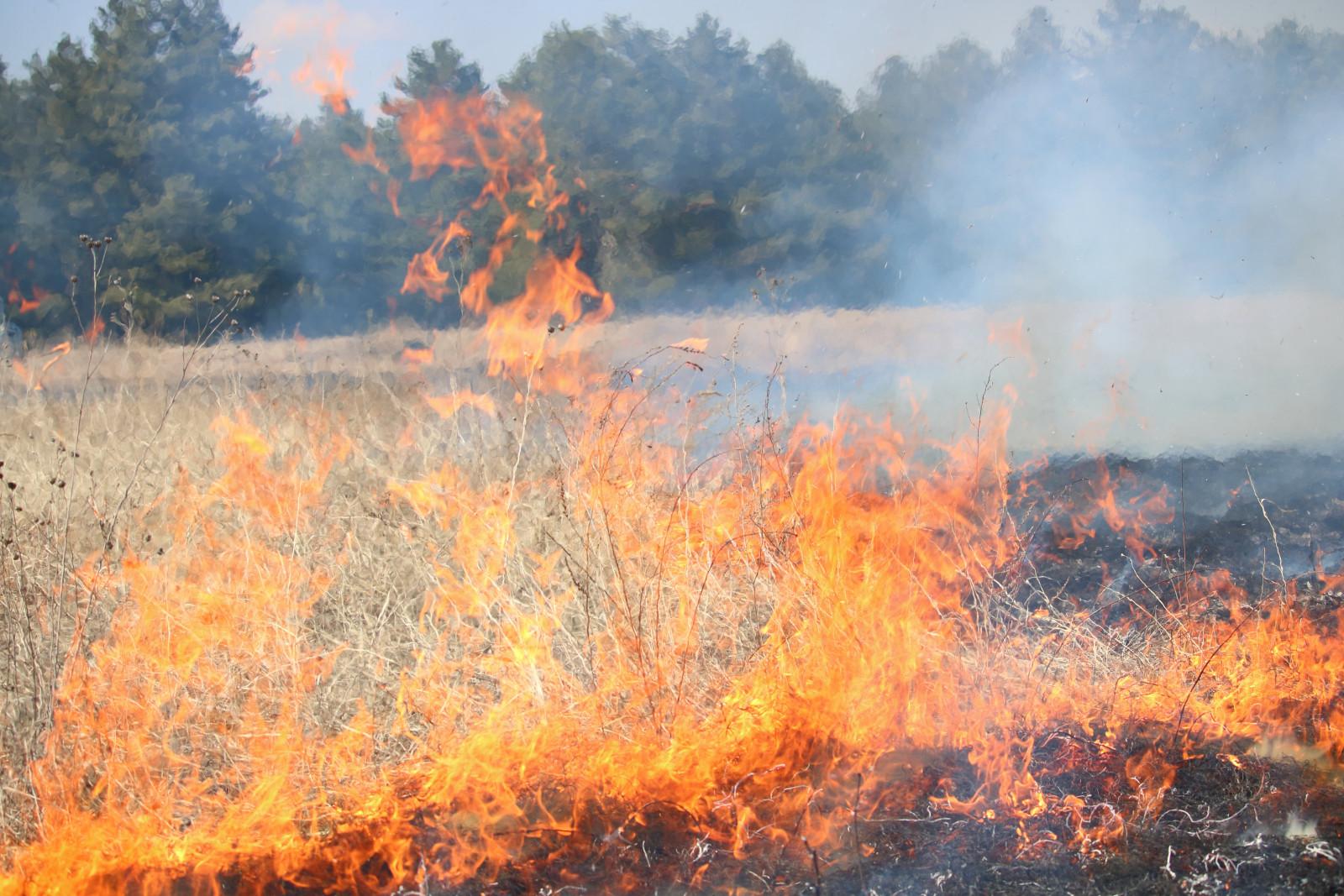 Муниципалитеты усилят противодействие выжиганию сухой растительности