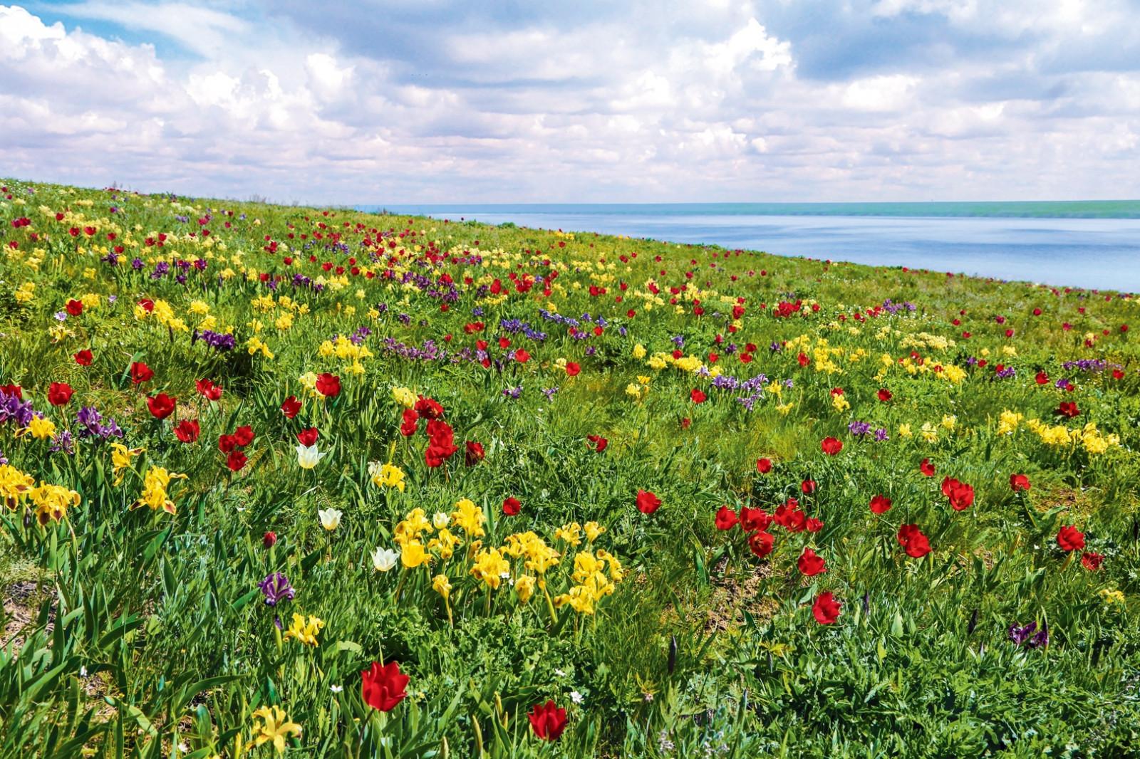 В долине Западного Маныча состоится фестиваль экологического туризма «Воспетая степь»