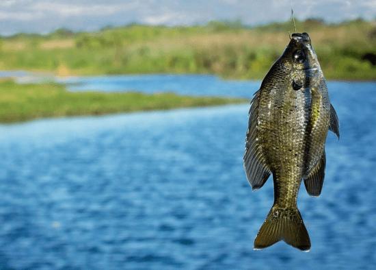 Дорогая рыбалка