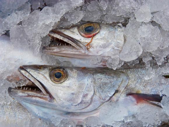 Рыбной отрасли в РФ пообещали расширить меры господдержки