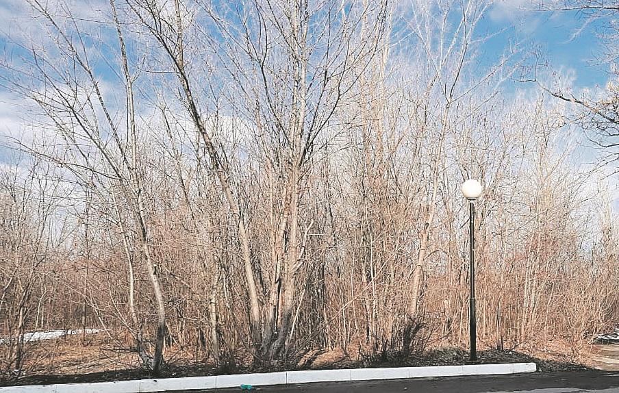 Шолоховский обновляет зеленую среду