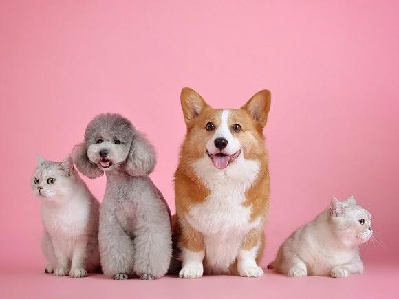 Принят закон, запрещающий изымать у должников домашних животных
