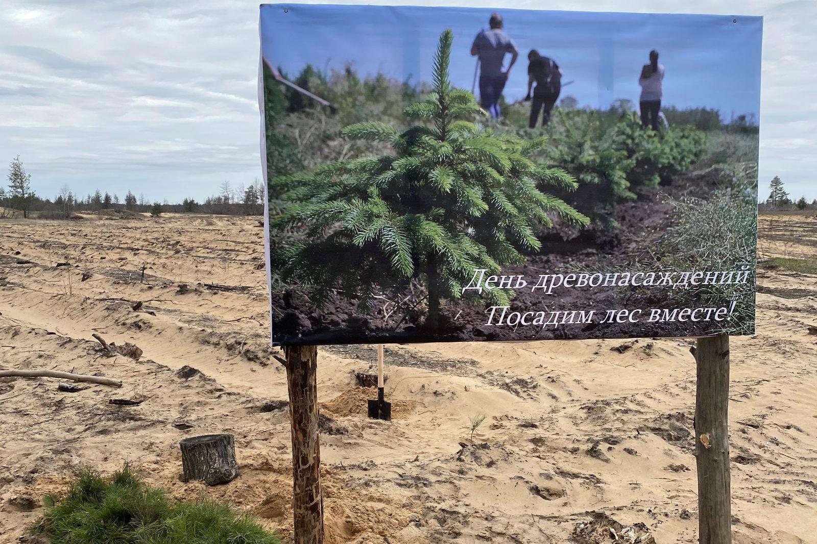 213 тысяч деревьев высажено на Дону