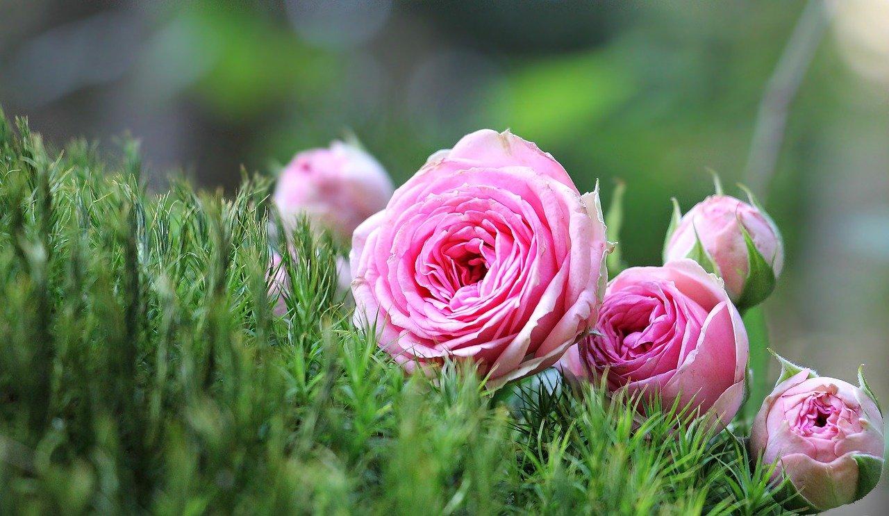 Круглый стол по вопросам садоводства и огородничества