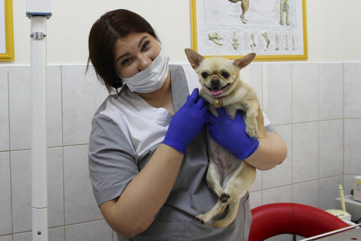 В Ростовской области пройдет день льготной стерилизации животных