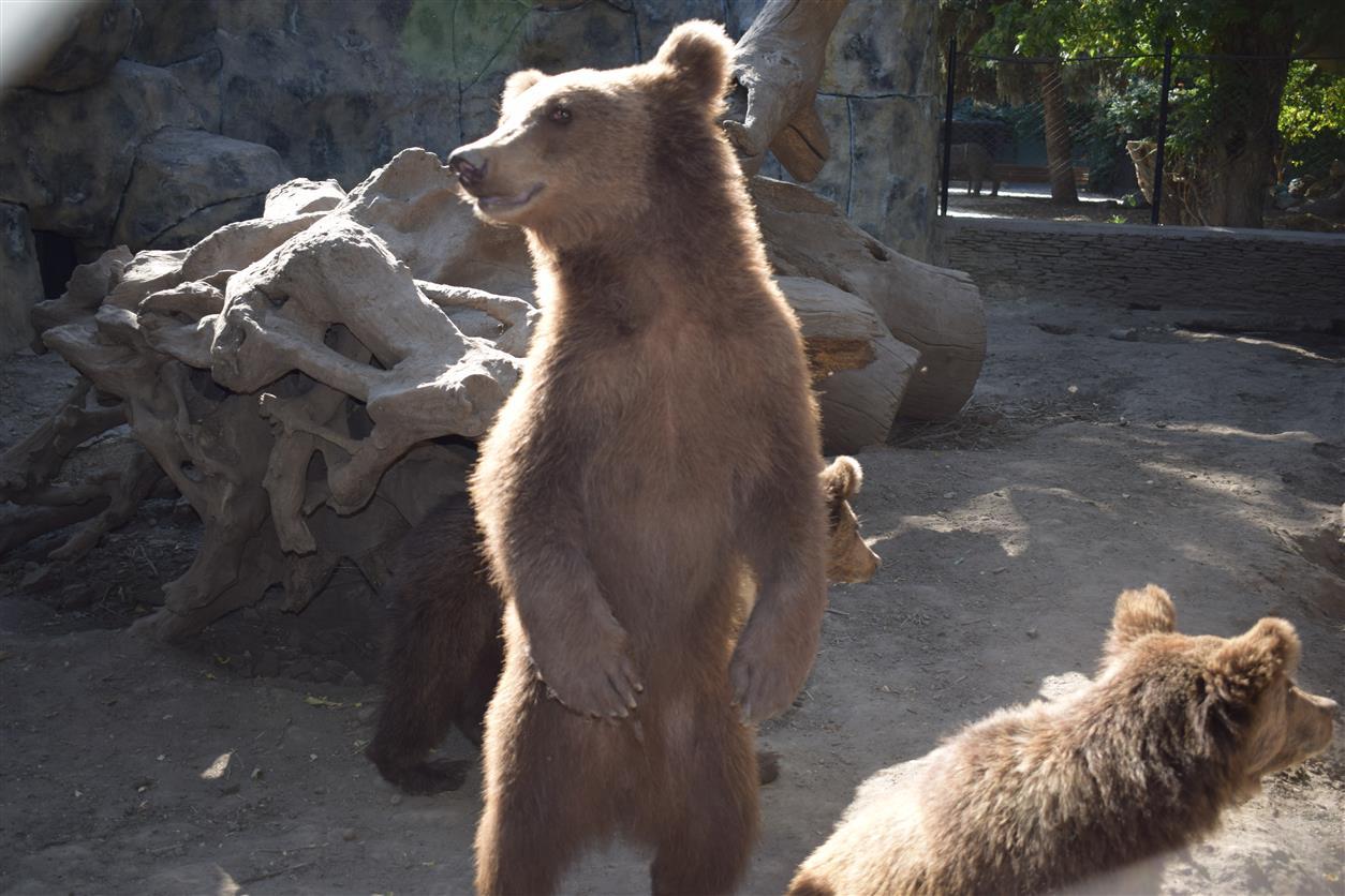Нарушения в Белокалитвинском зоопарке