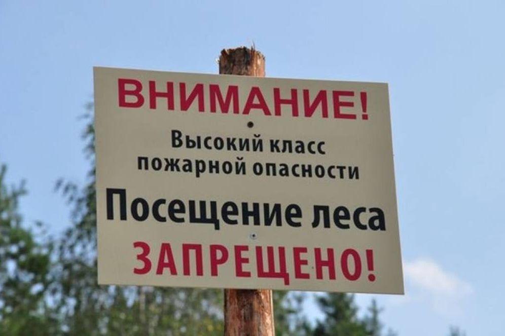 В Ростовской области продлён режим ограничения пребывания граждан в лесах