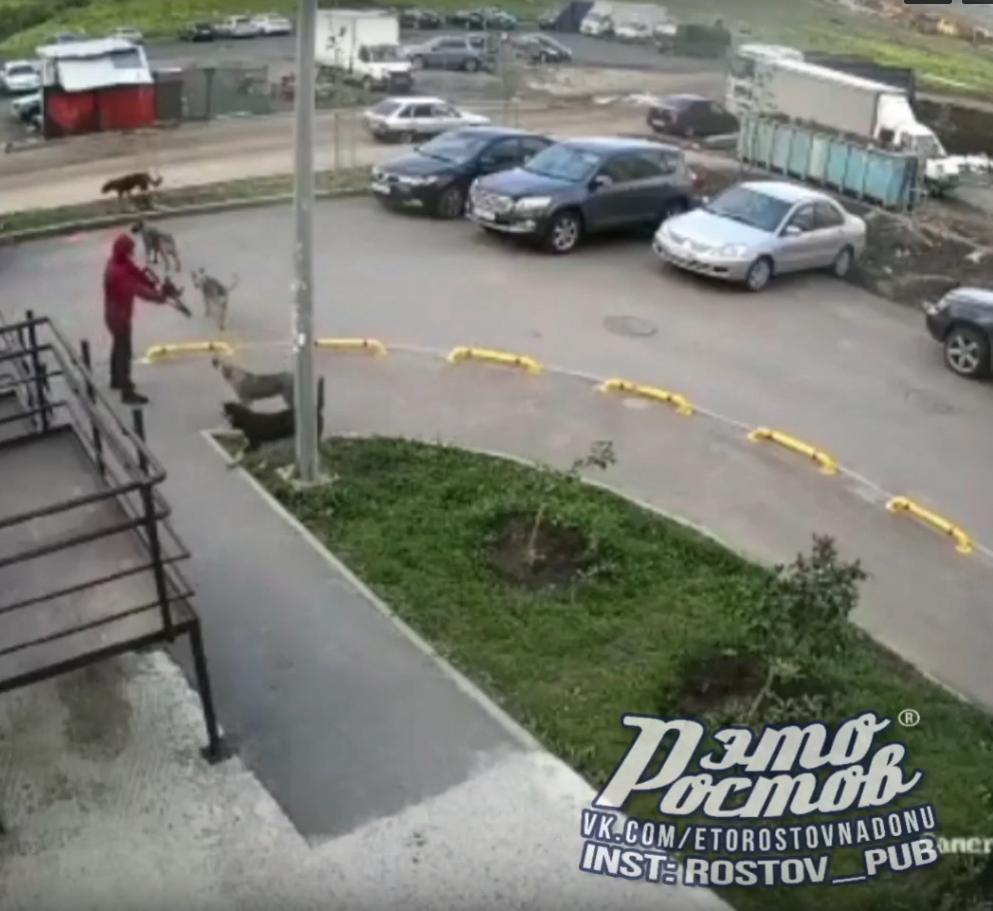 В Ростове-на-Дону мужчина расстрелял собак на глазах у детей