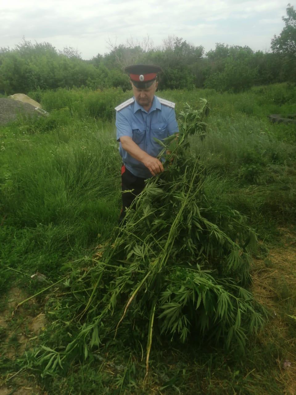 Погореловский ТОС способствовал уничтожению конопли