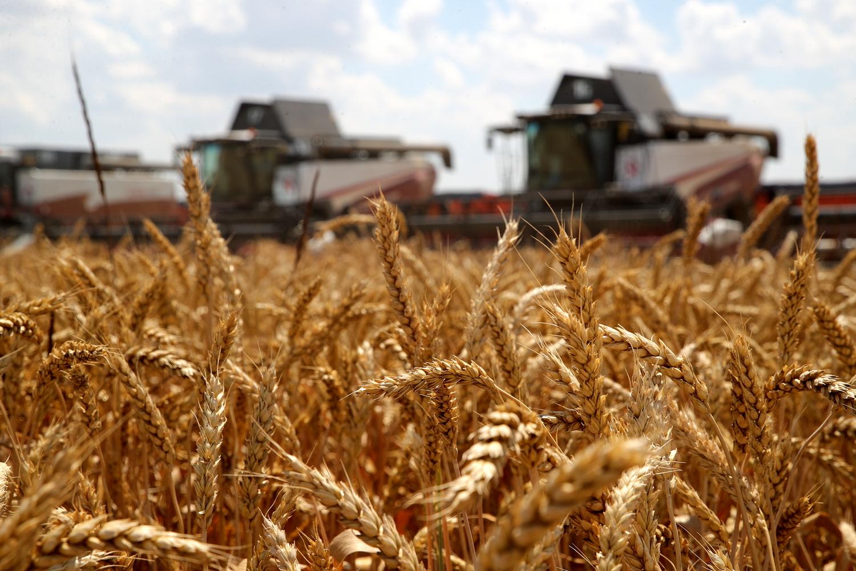 В Ростовской области собрали 1 млн тонн зерна в рамках уборочной кампании