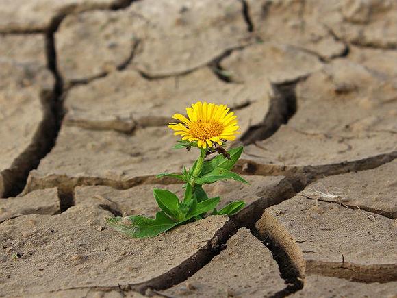 Гидрометцентр предупредил о возможном снижении урожая из-за засухи в ряде регионов