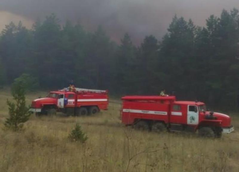 На севере Ростовской области сгорело около 42 гектаров леса