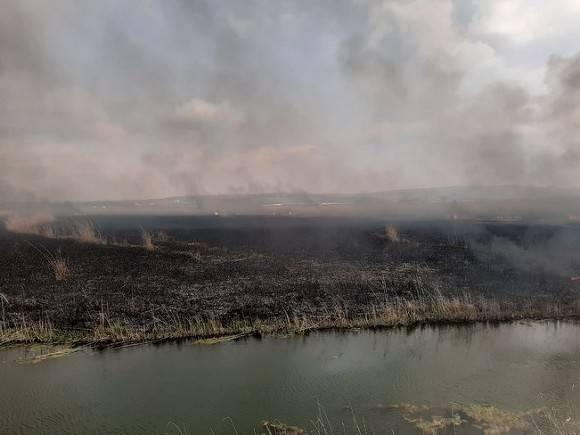 Россияне требуют спасти Якутию от лесных пожаров ради жизни планеты