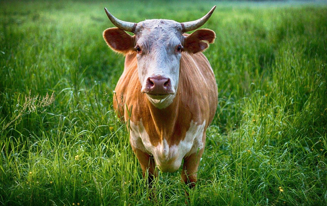 В Милютинском районе посреди пастбища обнаружили мертвого пастуха
