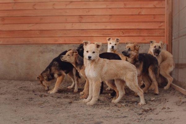 За полгода в регионе собаки покусали почти 4 тыс. человек
