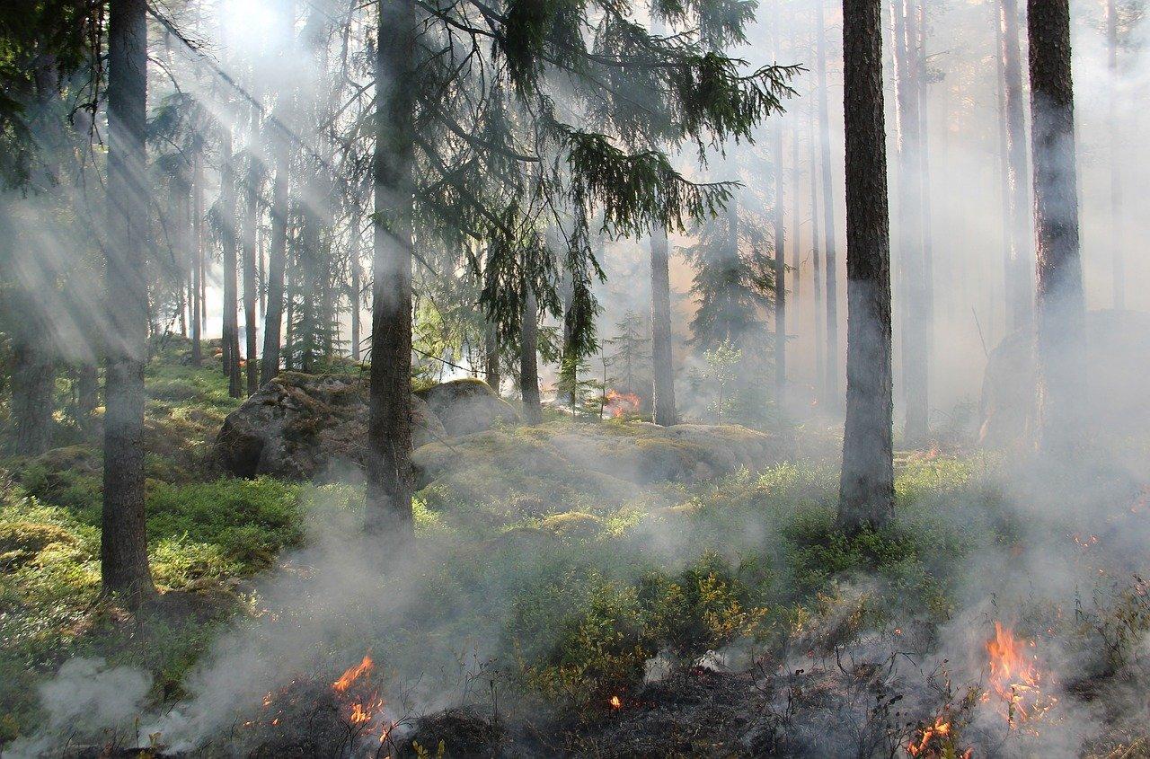 Ведены ограничения пребывания граждан в лесах