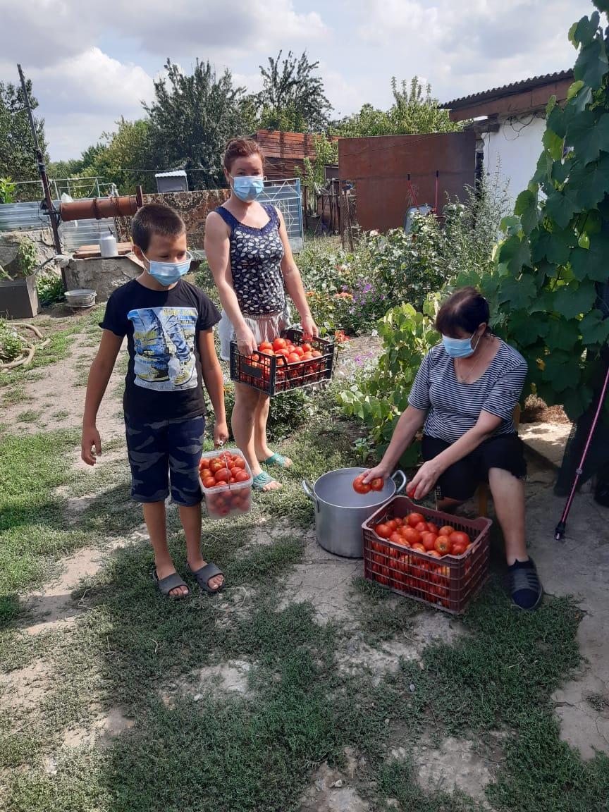 Семейный подряд на уборке помидоров