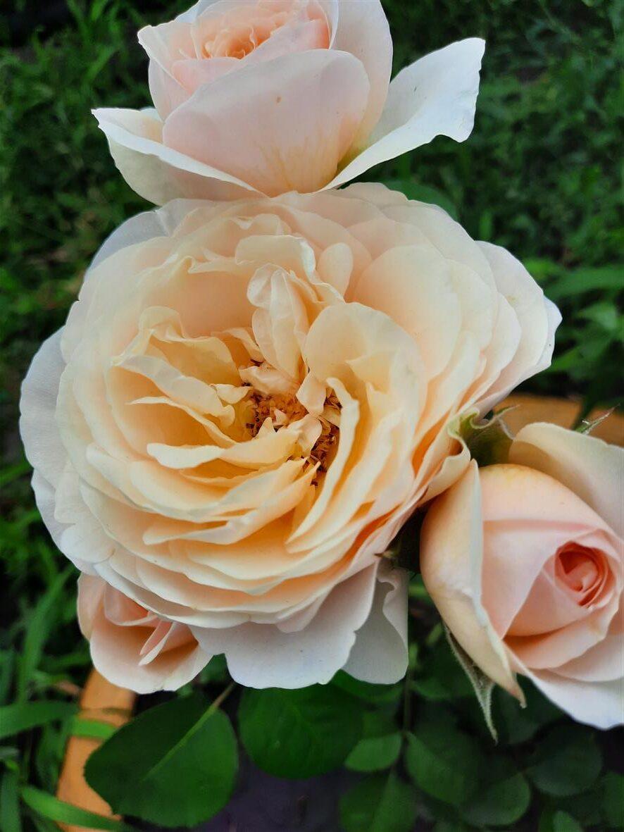 Цветы от Ирины Иванковой из Восточно-Горняцкого