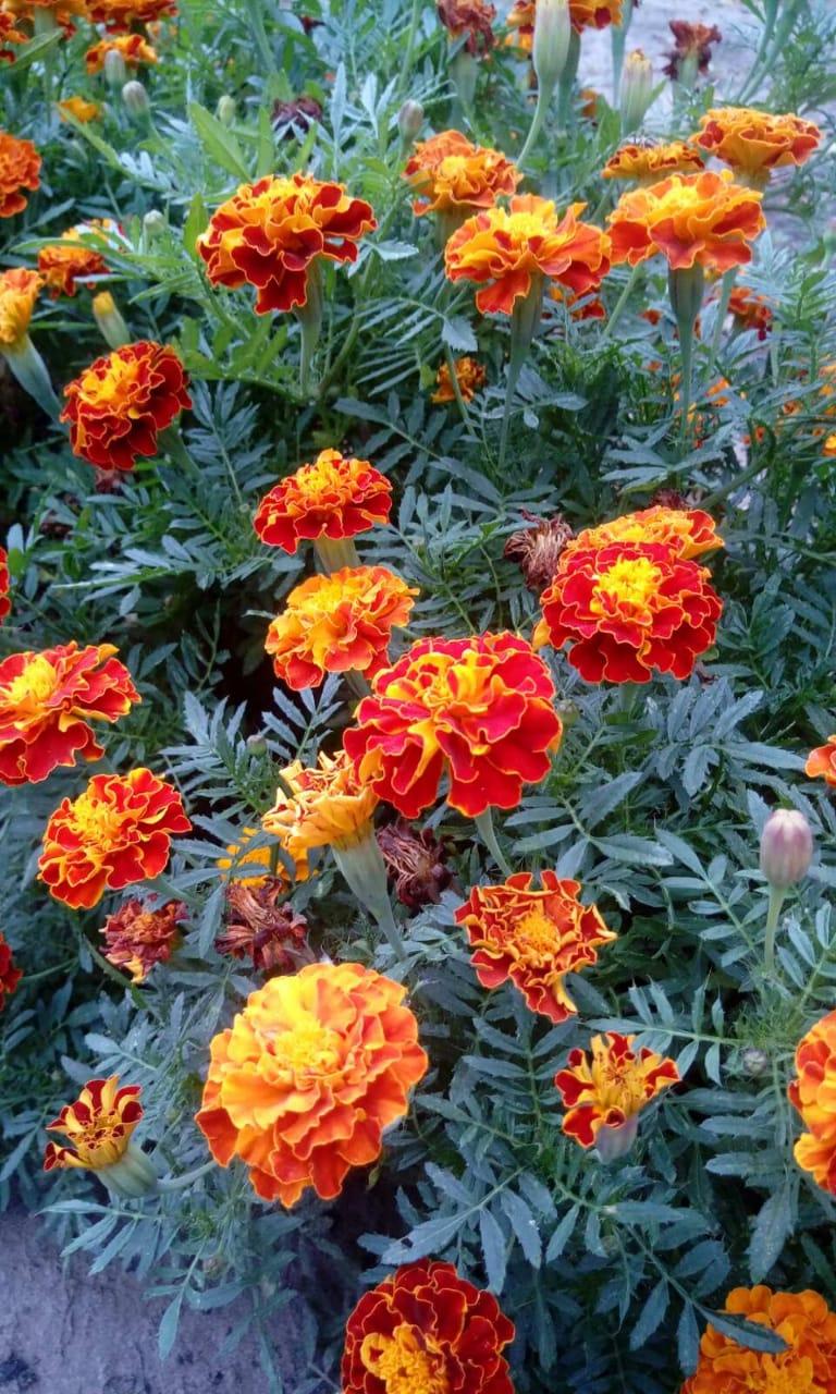 Цветы ко Дню города от Галины Аракчеевой