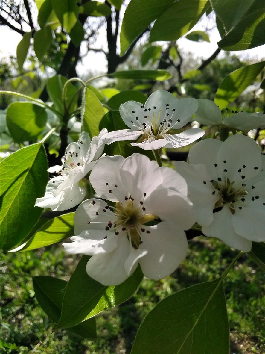Цветы от Татьяны Гончарук