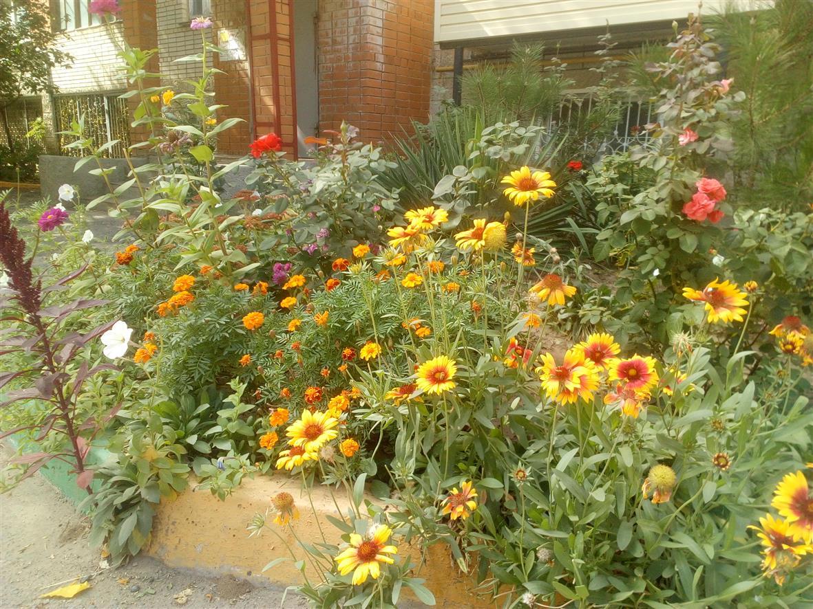 Во дворе дома №2 по ул. Строительной растут прекрасные цветы