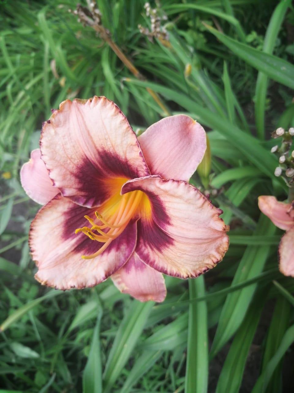 Цветы ко Дню города от Ирины Зимовейской