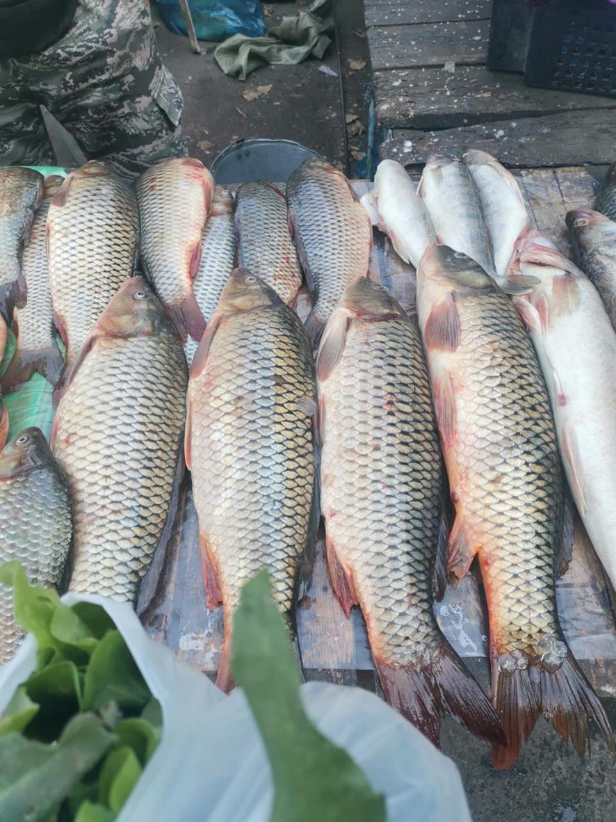 У обитающей в Ростовской области рыбы выявили опасные для человека болезни