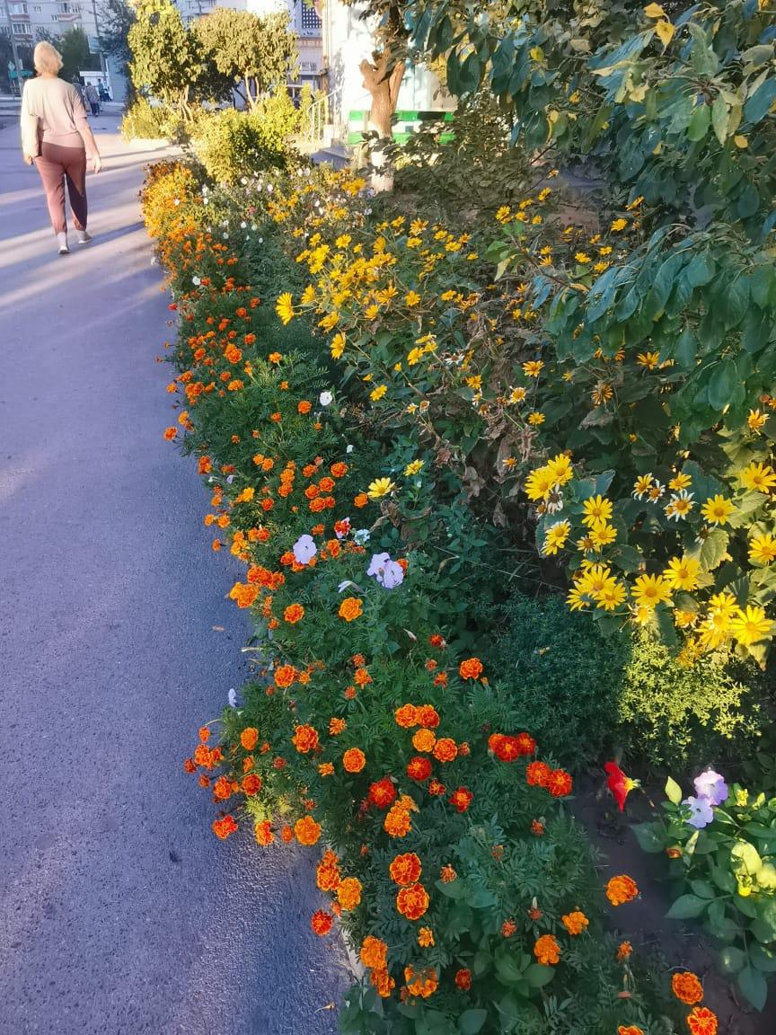 Замечательные цветы от жителей дома №7 по ул. Энтузиастов