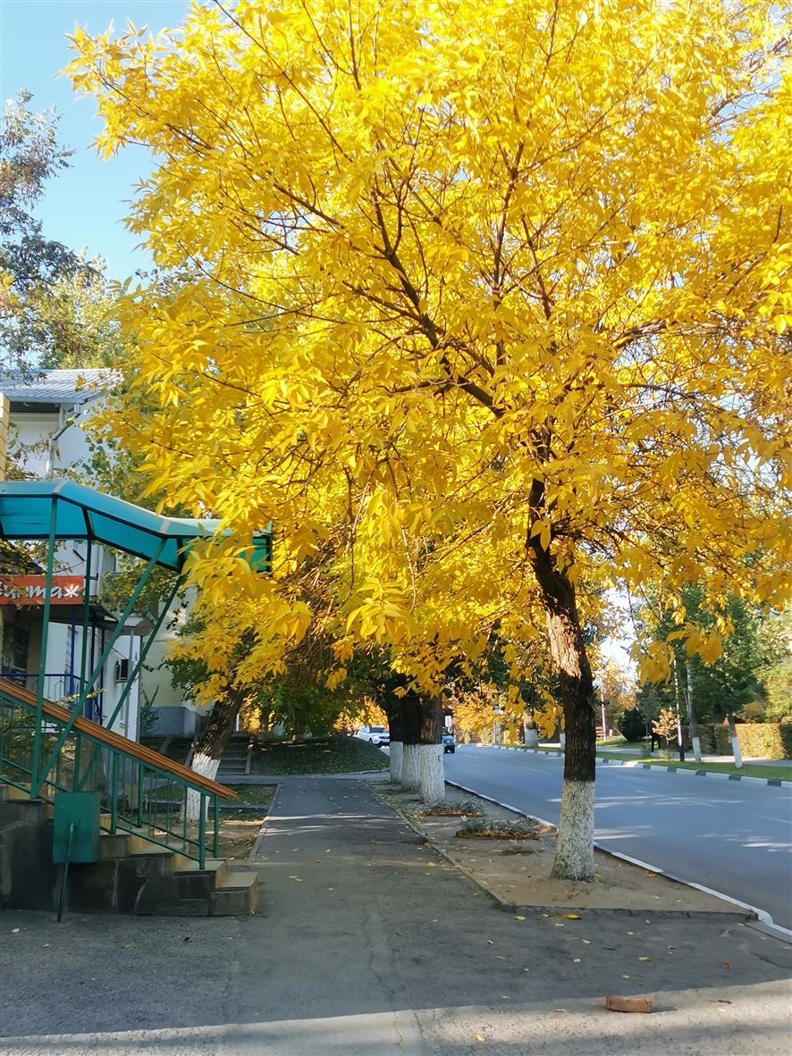 «Листья желтые над городом кружатся…»