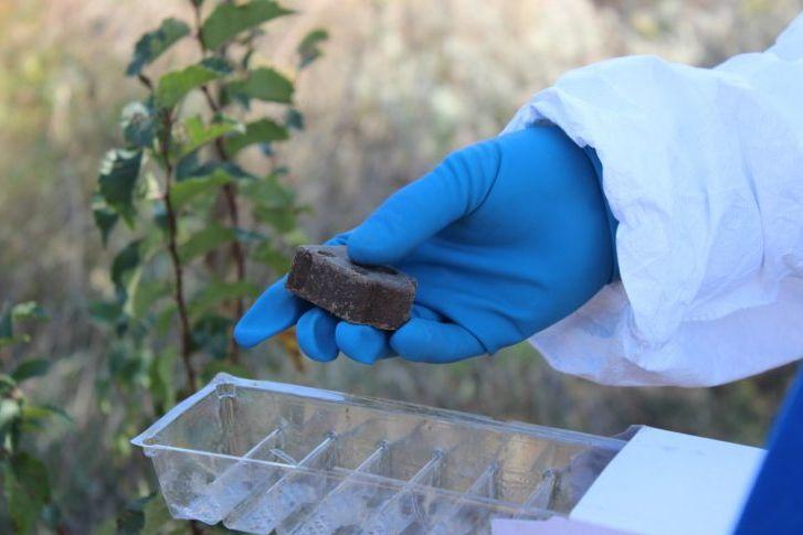 На территории охотничьих угодий Белокалитвинского района разложат приманки с вакциной от бешенства