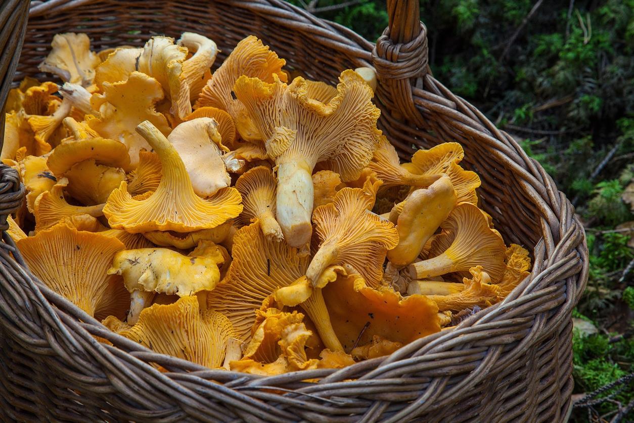 О пищевых отравлениях дикорастущими грибами и случаях регистрации ботулизма